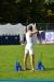 run-archery-den-haag-248